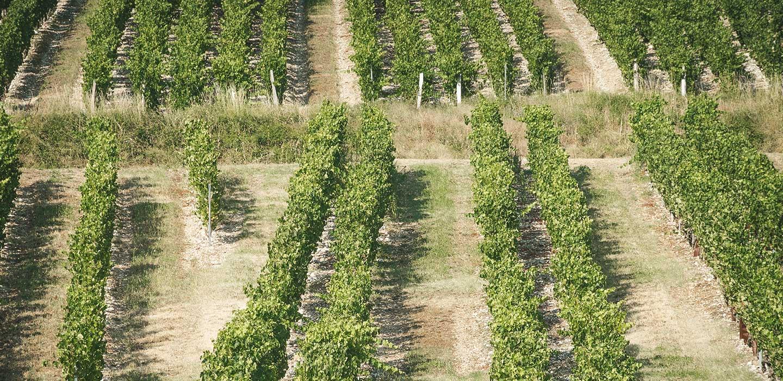 Vue Drone des vignes du Chateau de La Mar - Vins de Savoie